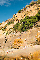 Coastline near Shag Point village and seaguls, Coastal Otago, East Coast, New Zealand
