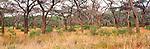 Acacia grove, Ngorongoro Crater, Tanzania