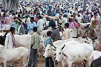 INDIA Jharkhand, cattle market in village / INDIEN Jharkhand, Viehmarkt in einem Dorf
