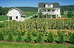 Architecture: Rural: Amish