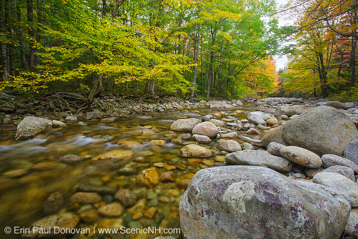 Zealand River in the White Mountains, New Hampshire during the autumn months. The Zealand Valley Railroad (1886-1897) traveled along side of this river.