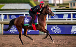 October 30, 2019: Breeders' Cup Turf entrant Alounak, trained by Waldemar Hickst, exercises in preparation for the Breeders' Cup World Championships at Santa Anita Park in Arcadia, California on October 30, 2019. Michael McInally/Eclipse Sportswire/Breeders' Cup/CSM