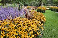 Rudbeckia hirta, Black-eye Susan yellow flower in garden border with Perovskia, and Phormium by small lawn