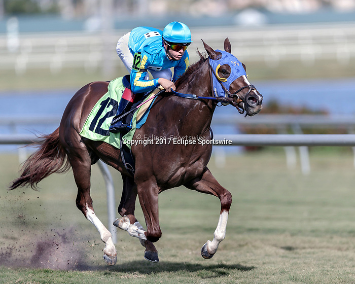 HALLANDALE BEACH, FL - December 16: Catharsis #12 wins the $25,000 Maiden Claiming for trainer J. David Braddy with jockey Tyler Gaffalione in the irons at Gulfstream Park on December 16, 2017 in Hallandale Beach, FL. (Photo by Bob Aaron/Eclipse Sportswire/Getty Images)