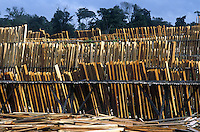 Boards drying in the sun at sawmill in Amazon rainforest at Marajo Island in Amazon estuary, Para, Brazil
