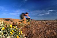 Mountain biker speeds by yellow Mules Ear flowers, Bartlett Wash, Moab, Utah