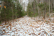 A section of the closed Wilderness Trail, pass the Bondcliff Trail junction, in the Pemigewasset Wilderness, New Hampshire. This section of trail follows the old East Branch & Lincoln Railroad Bed (1893-1948). After two bridges were removed in 2009 and 2010, this section of trail was closed. And a trail crew placed brush in the trail to discourage usage of the trail. Doing this also helps in the revegetation process of the area. By November 2012, hikers had removed much of the brush from the closed section of trail.