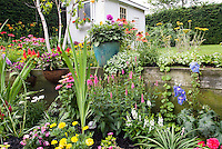 Perennial and annuals garden full of flowers, with backyard shed. Obedient plant Physotegia, marigolds, Echinacea purple coneflowers, Begonias, Impastiens, , Delphinium, Achillea, Coreopsis, Dahlia in pot container, windowbox of begonias, impatiens, in tiered garden on two levels