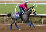 DEL MAR, CA - NOVEMBER 01: Hunt, owned by Mike House and trained by Philip D'Amato, exercises in preparation for Breeders' Cup Mile  at Del Mar Thoroughbred Club on November 1, 2017 in Del Mar, California. (Photo by Sue Kawczynski/Eclipse Sportswire/Breeders Cup)