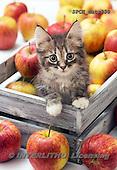 Xavier, ANIMALS, REALISTISCHE TIERE, ANIMALES REALISTICOS, cats, photos+++++,SPCHCATS850,#a#