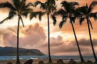 Palm trees and sunrise. HJanalei, Kauai, Hawaii