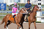 February 21, 2015: Distinta on post parade before the start of the Davona Dale Stakes(G2). Gulfstream Park, Hallandale Beach (FL). Arron Haggart/ESW/CSM