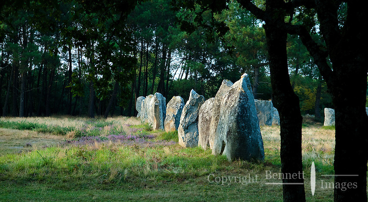 The setting sun illuminates a row of ancient standing stones called Menhirs, near the village of Carnac in Brittany, France.
