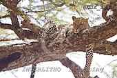 Dr. Xiong, ANIMALS, wildlife, photos, AUJX127,#a#