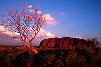 Distant view of Uluru (Ayers rock) - a sacred Aboriginal site in the Australian outback. Australia.