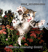 REALISTIC ANIMALS, REALISTISCHE TIERE, ANIMALES REALISTICOS, cats, paintings+++++,USLGSC162044509,#A#, EVERYDAY ,photos,fotos,pounce,cat,cats,kitten,kittens,Seth