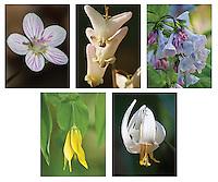 Woodland Wildflowers Note Card set