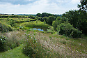 View from top of garden down to Upper Pond, Fairlight End, Pett, East Sussex, late June.