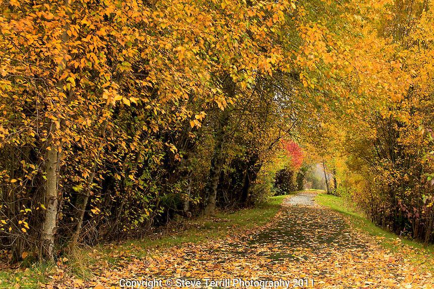 Path though Pic - E Zone Wetlands Natural Area in Portland, Oregon