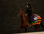 November 2, 2020: Tarnawa, trained by trainer Dermot K. Weld, exercises in preparation for the Breeders' Cup Turf at Keeneland Racetrack in Lexington, Kentucky on November 2, 2020. Carolyn Simancik/Eclipse Sportswire/Breeders Cup