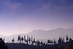 Asia, TUR, Turkey, Aegean Coast, Aegean, Soeke, Typical Landscape, Cypress, Cupressus sempervirens