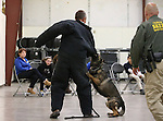 Volunteer Bruce Huff, Carson City Sheriff's Sgt. Brian Humphrey and his K-9 partner Ivo demonstrate patrol skills for a group of GATE students from Carson Middle and Eagle Valley Middle schools, on Wednesday, March 5, 2014 at Fuji Park.<br /> Photo by Cathleen Allison/Nevada Photo Source
