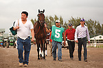 Ron the Greek on his way to the saddling paddock for the Florida Sunshine Millions Classic at Gulfstream Park.  Hallandale Beach Florida. 01-19-2013