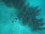 Yucatan fish