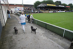 Pollok 2 Neilston Juniors 1, 13/08/2008. Newlandsfield, Sectional League Cup. A woman spectator walking her dogs around the pitch as Pollok (black-and-white) take on local rivals Neilston Juniors in a Sectional League Cup (Central) Section 5 tie at Newlandsfield on Glasgow's south side. The home side won the game by 2-1 in front of 302 fans. Junior football was divided into East, West and North sections and played throughout Scotland. It had its own governing body, the SJFA and regional pyramid structure and national cup competition. Photo by Colin McPherson.