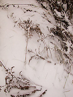 Close up view of plants on snow covered ground<br />
