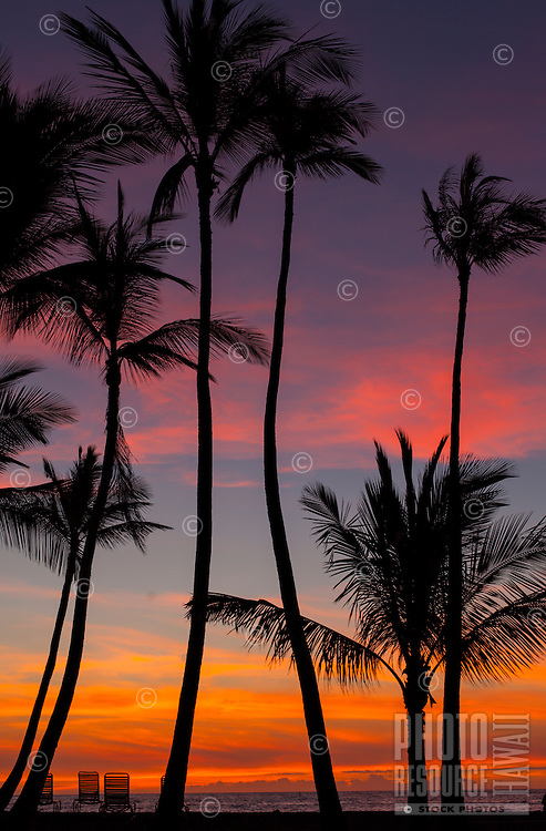 A silhouette of beach chairs and palm trees against a colorful sunset off 'Anaeho'omalu Bay, Waikoloa Beach, Big Island.