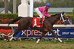 Here to Win with jockey Joe Bravo winning The Very One Stakes(G3T) at Gulfstream Park. Hallandale Beach, Florida. 02-25-2012