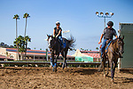 DEL MAR,CA-AUGUST 17: Arrogate comes back from the track at Del Mar Race Track on August 17,2017 in Del Mar,California (Photo by Kaz Ishida/Eclipse Sportswire/Getty Images)