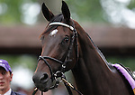 July 21, 2012  Royal Delta walks in the paddock before winning the Delaware Handicap, with Mike Smith up, at Delaware Park, Stanton, DE. Trainer is William Mott.  ©Joan Fairman Kanes/Eclipse Sportswire
