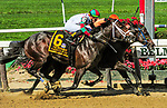 """SEPT 28, 2019 : Imperial Hint #4 (inside) with Javier Castellano, holds off Firenze Fire #6, to win the $300,000 """"Win and You're In""""  Vosburgl Stakes, at 6 furlongs, at Belmont Park, in Elmont, NY, Sept 7, 2019. Sue Kawczynski_ESW_CSM,"""