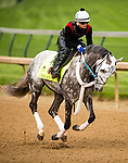 LOUISVILLE, KY - MAY 04: Creator gallops in preparation for the Kentucky Derby at Churchill Downs on May 04, 2016 in Louisville, Kentucky.(Photo by Alex Evers/Eclipse Sportswire/Getty Images)