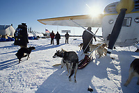 Dropped Dogs Being Loaded Into Jim Kintz's Plane