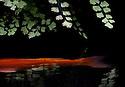 A pond  at Matthaei Botanical Gardens in Ann Arbor, MI