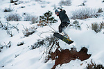 AJ Gutierrez, 16, snowboards in Kings Canyon,  in Carson City, Nev., on Monday, Jan. 23, 2017.<br />Photo by Kevin Clifford/Nevada Photo Source