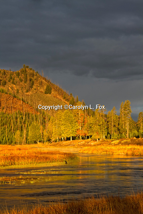 The soft morning light illuminates the valley in Yellowstone National Park.