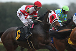 February 17, 2020: Whoa Nellie (6) with jockey Joseph Rocco Jr. aboard during the Bayakoa Stakes at Oaklawn Racing Casino Resort in Hot Springs, Arkansas on Feburary 17, 2020. Justin Manning/Eclipse Sportswire/CSM\