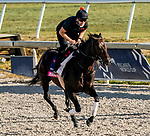 January 22, 2021: Breaking The Rules exercises as horses prepare for the 2021 Pegasus World Cup Invitational at Gulfstream Park in Hallandale Beach, Florida. Scott Serio/Eclipse Sportswire/CSM