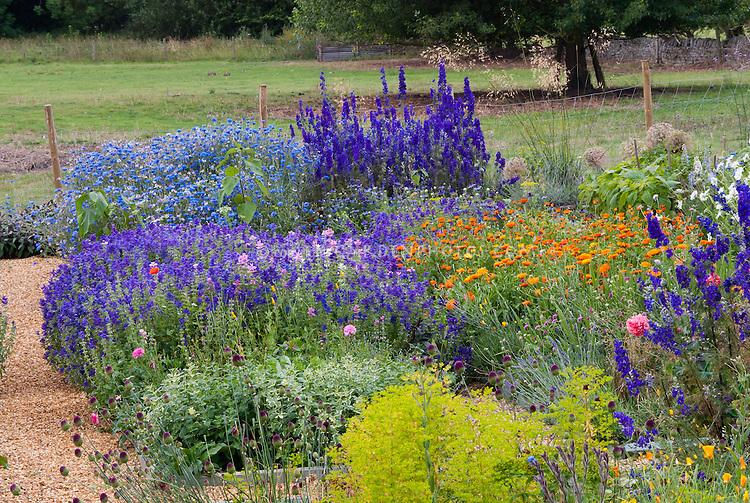 Hobby farm cutting garden for cut flowers to sell. Larkspur, calendula, bachelor buttons, salvia, poppies, cosmos, euphorbia, allium, etc
