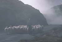 Europe/France/Aquitaine/64/Pyrénées-Atlantiques/Pays de Cize: Berger et son troupeau au col de Burdincurutcheta