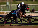 OCT 25: Breeders' Cup Juvenile Turf entrant War Beast, trained by Doug F. O'Neill, at Santa Anita Park in Arcadia, California on Oct 25, 2019. Evers/Eclipse Sportswire/Breeders' Cup