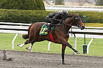 April 03, 2014: Hip 125 Smart Strike - Luna Vega consigned by Eddie Woods worked 1/4 in 20:4.  Candice Chavez/ESW/CSM