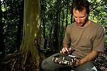 Bornean Clouded Leopard (Neofelis diardi borneensis) researcher Andrew Hearn checking camera trap, Kinabatangan River, Sabah, Borneo, Malaysia