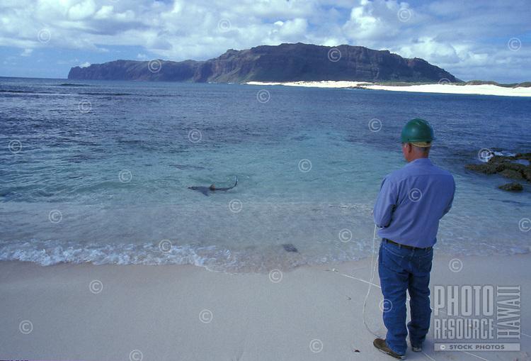 Keith Robinson watches a reef shark swimming in shallow waters off white sand beach, Niihau, Hawaii