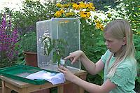 Kinder züchten Schmetterlings-Raupen, Terrarium wird mit einem Strauß frischer Brennnesseln als Raupenfutterpflanze bestückt, Vase wird nach oben mit Watte abgedichtet, um ein Ertrinken der Raupen zu verhindern