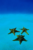 Starfish decorate the tropical ocean floor
